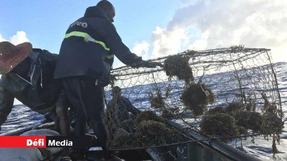 Marée noire/MV Wakashio : la reprise de la pêche en mer dans les régions affectées à partir du 12 décembre