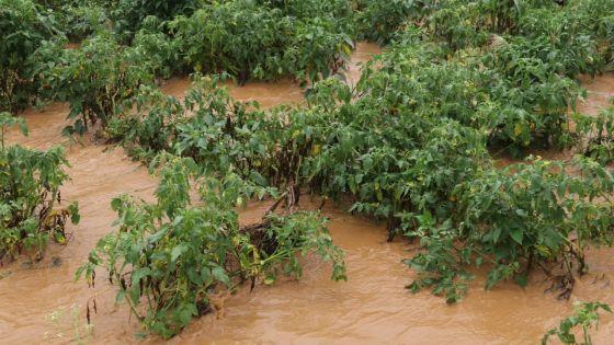 Grosses pluies : des plantations affectées à 10 %, selon le FAREI