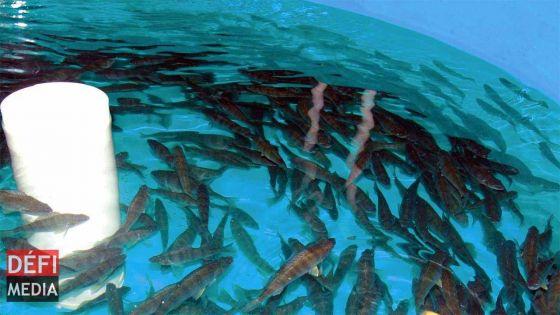 Tribunal de l'Environnement: l'AHRIM n'était pas contre l'aquaculture […] mais cela peut avoir un impact sur l'environnement, selon l'avocate de l'association