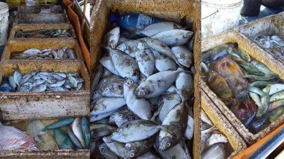 Les banyans sans WAP : La pêche est autorisée mais les poissons ne s'écoulent pas