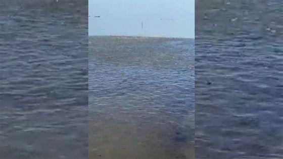 Marée noire : les poissons en danger à Anse-Jonchée