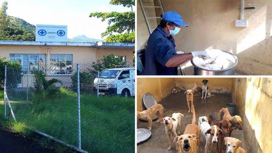 Allégations de mauvais traitements - La MSAW affirme que les animaux sont bien traités et bien nourris