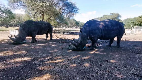 Journée mondiale du rhinocéros : rencontre avec Benji et Ella ce mercredi matin