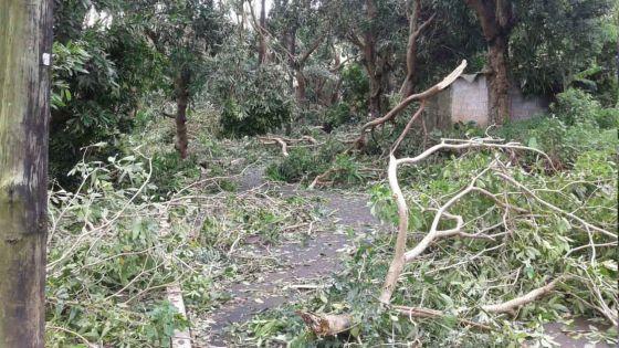 Post-cyclone Gelena : Soutenez financièrement Rodrigues via le Prime Minister's Relief Fund