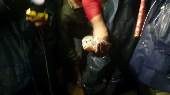 En pleine inondation à La Caverne : un poisson surgit sur la route et fait le buzz