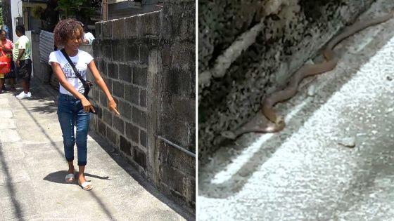 Cassis : une ado croit découvrir un « serpent » en pleine rue