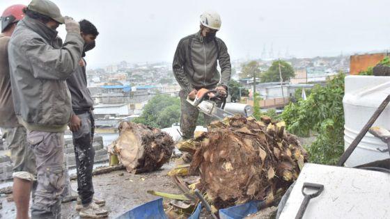 Des vents violents ont provoqué des chutes d'arbres dans la capitale