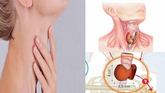 Thyroïde : Quels examens faire pour dépister et diagnostiquer ?
