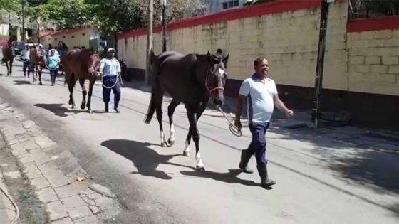Hippisme : Les chevaux à la marche ce vendredi