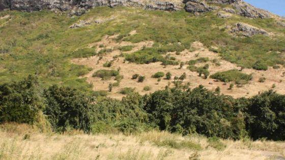 L'État reprendra 170 arpents de terres aux coopératives inopérantes pour les redistribuer pour l'agriculture et l'élevage