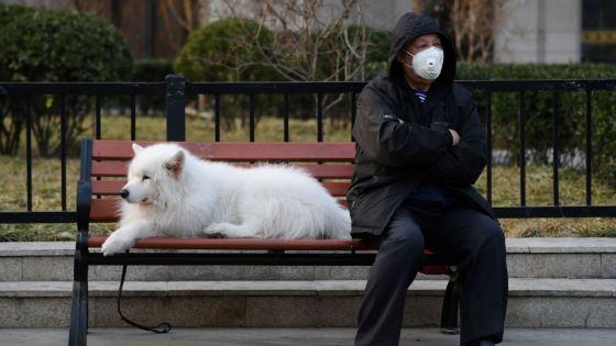Hong Kong : les animaux domestiques des malades du coronavirus iront en quarantaine