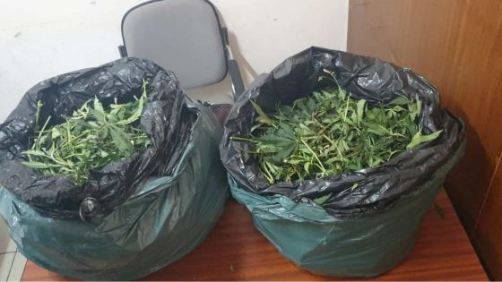Valton : 11 kg de cannabis saisis dans un terrain en friche