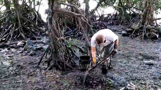 Marée noire : Le nettoyage est toujours en cours sur la côte du Sud-est