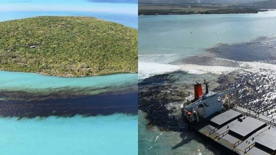 Fuite d'huile du Wakashio : triste spectacle autour de l'Ile aux Aigrettes