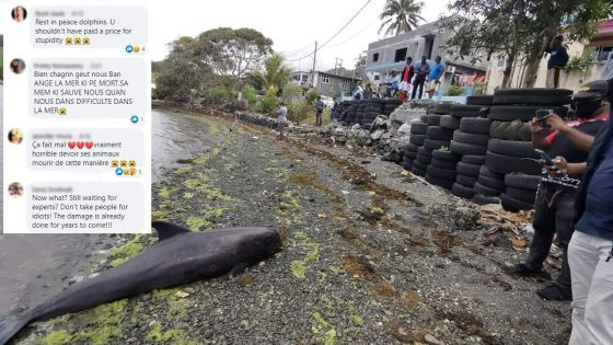 Sud-Est : la mort des dauphins suscite désolation, colère et inquiétude