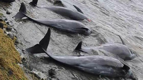 Bilan à midi : 37 dauphins morts retrouvés depuis mercredi