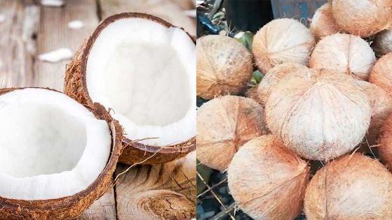 En marge de la fête Maha Shivaratri : AMB fixe le prix de la noix de coco à Rs 30 l'unité