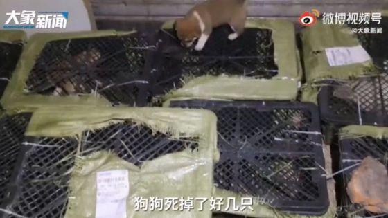 Des colis de chiots: découverte macabre en Chine