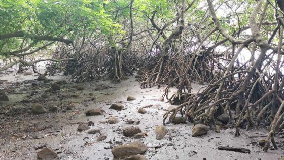Premier anniversaire du naufrage du MV Wakashio : «Plus de 2 600 tonnes de déchets dangereux ont été enlevés en un temps record de quatre mois», dit Polyeco