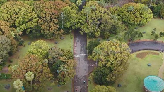 Curepipe : le jardin botanique accessible à pied uniquement