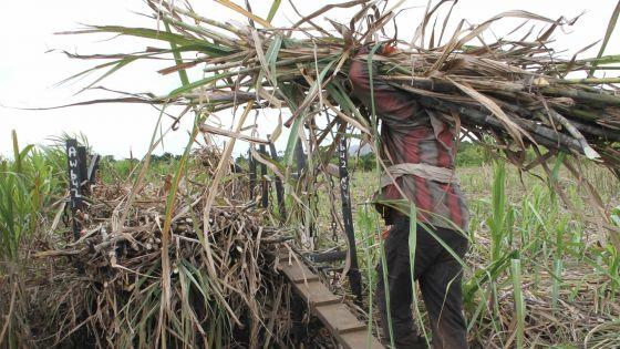 Patrimoine foncier: Le GM a pris possession de 761 arpents de terre de la MSPA