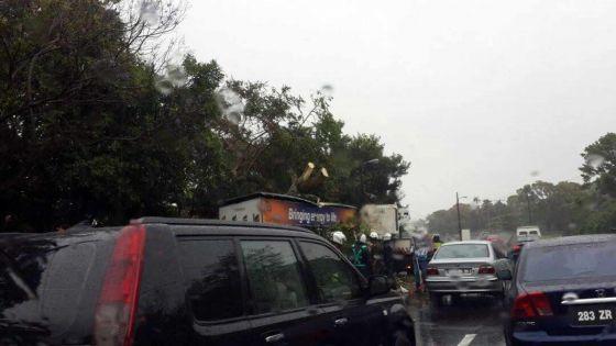 Phoenix: circulation interrompue après la chute d'un arbre