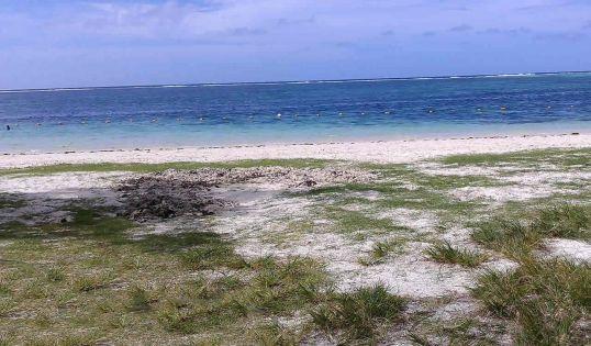 Deux requins dans le lagon de Palmar : la police appelle à la vigilance