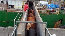 Importation de bétail :Agro-boss Feedlot brisele monopole tenu par Socovia