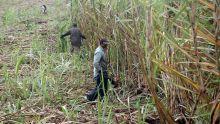 Parlement : la PNQ axée sur une fraude alléguée au préjudice de 10 000 petits planteurs