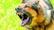 Mordue par un chien de race : une femme encourt elle-même ses frais médicaux