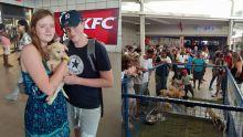 Journée mondiale des animaux : journée d'adoption et cérémonie religieuse organisées par la MSAW