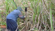 Industrie cannière : une délégation de la Banque mondiale à Maurice
