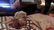 Lynché sur les réseaux sociaux : Clency nie avoir brûlé vif Dodo, le chien