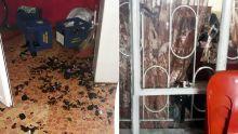 Vengeance alléguée : une maison vandalisée à cause d'un singe