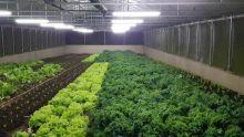 Agriculture bio : ces planteurs qui cultiventdes légumes peu communs