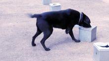 La MRA injecte Rs 1,2 million dans l'acquisition  de chiens renifleurs