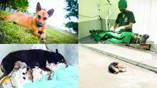 Perpétuel combat : quand les chiens errants nous mènent la vie dure
