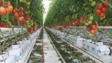 Forte odeur dans une plantation hydroponique : le problème résolu après la visite de la police de l'Environnement