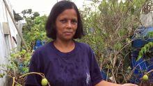Se mettre au vert : Jardiner sans jardin, c'est possible