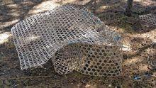 Entre le port et la baie : des plongeurs volent des priseset détruisent des espèces marines