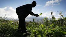 Production : Quand Medine, SKC Surat et ENL misent sur l'agriculture raisonnée
