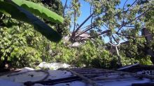 Les pompiers à la rescousse : un arbre s'effondre sur sa maison