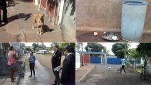 Mort suspecte de 10 chiens à Terre-Rouge : la thèse de la rage écartée