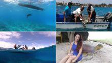 Aquarium de Maurice :Touga 2 retrouve sa liberté