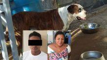 Trafic de chiens de race - Un réseau en passe d'être démantelé: deux arrestations