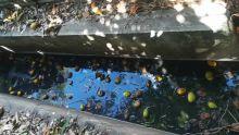 Sainte-Croix : de l'eau stagnante incommode des habitants