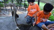 Casela : profiter des vacances dans un  'zookeeper camp'