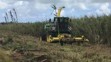 Biocarburant : le «fatak» supplante le charbon dans les chaudières