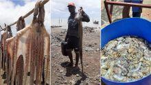 Rodrigues : réouverture de la pêche à l'ourite