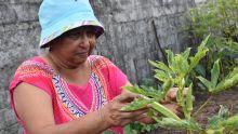 Lakshmi Gunessee : pionnière de l'agriculture bio à Maurice